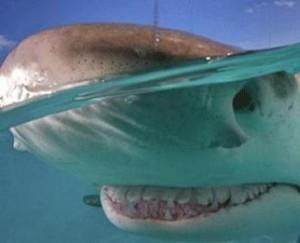 Köpekbalığı gülümser mi?